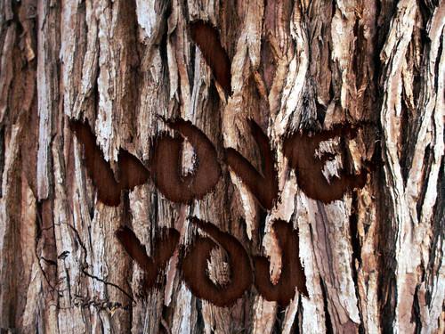 Grabado en corteza de árbol // Tutorial Photoshop (San Valentín)