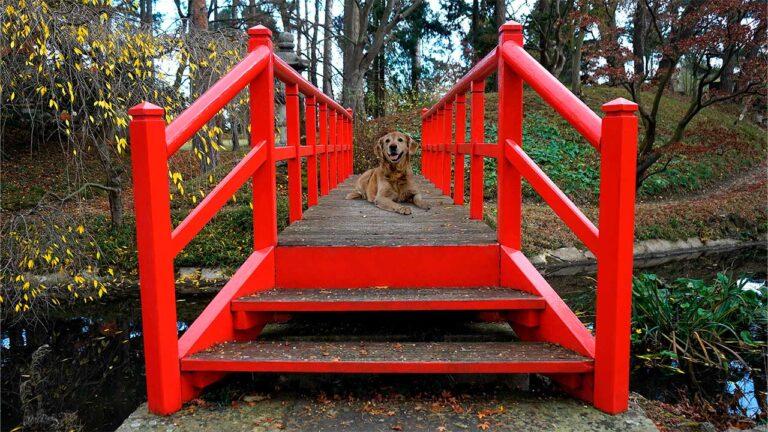 puente-perro