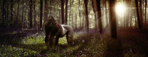 Lee más sobre el artículo Tutorial Photoshop // Cómo crear profundidad con la Iluminación by @ildefonsosegura